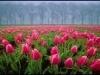 ImgEveG852_flores-holambra